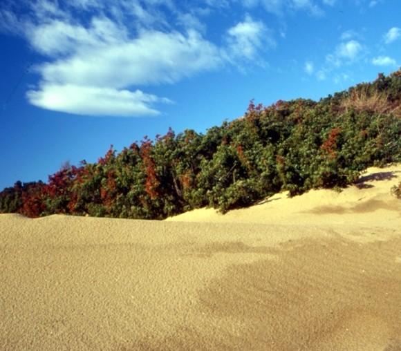 014 Sabaudia - La duna1