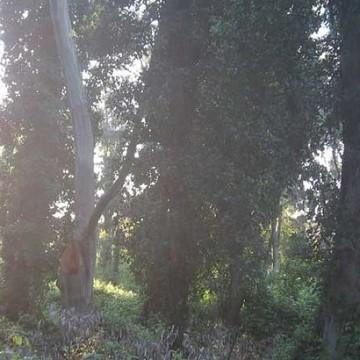 parco-nazionale del circeo